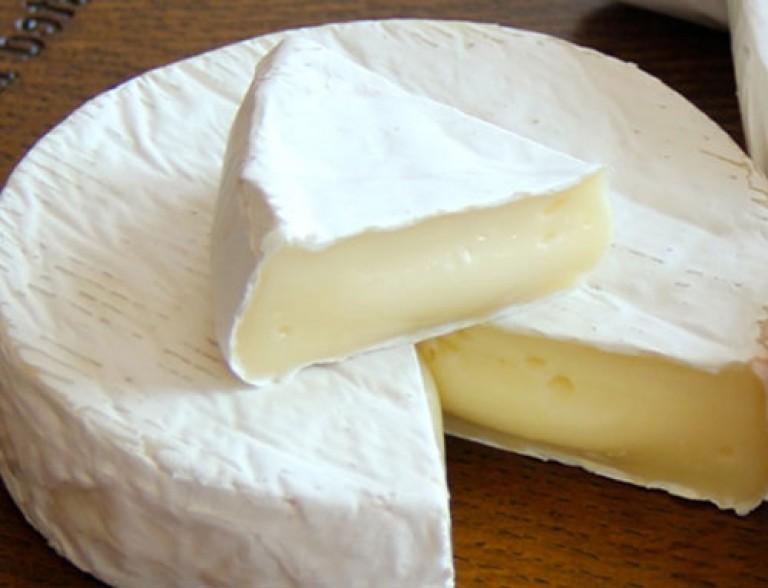 Плесень для сыра в домашних условиях 18